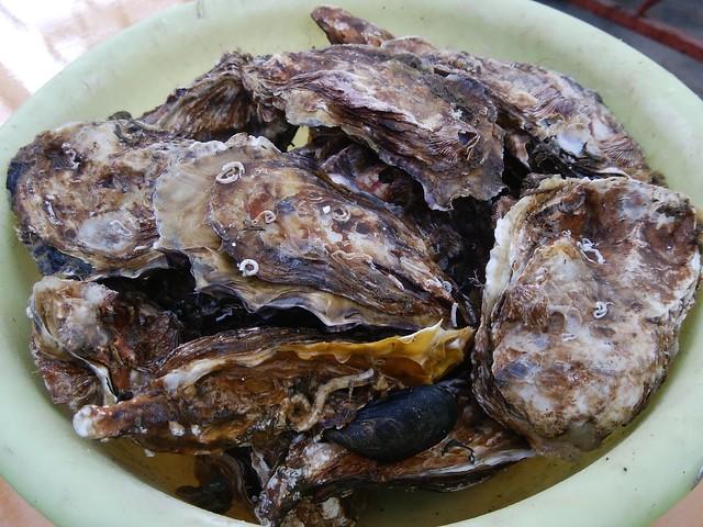 hiroshima-hatsukaichi-shimada-suisan-oyster-hut-grilled-oysters-04