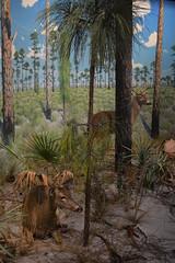 Bradenton, FL - South Florida Museum - Pine Uplands - White-tail Deer