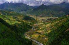 Tu le Rice Terraces, Vietnam