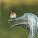 Welcome Swallow ---- Hirundo neoxena by creaturesnapper