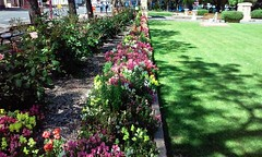 Unley. Miniature snapdragons and roses in the Unley War Memorial Gardens which were created in 1920.