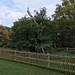 Druid's Oak at Burnham Beeches