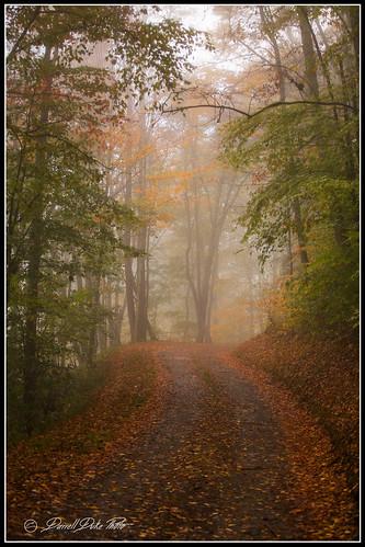 heintoogaroundbottomroad eriefog fall fallcolors mist mistyroad
