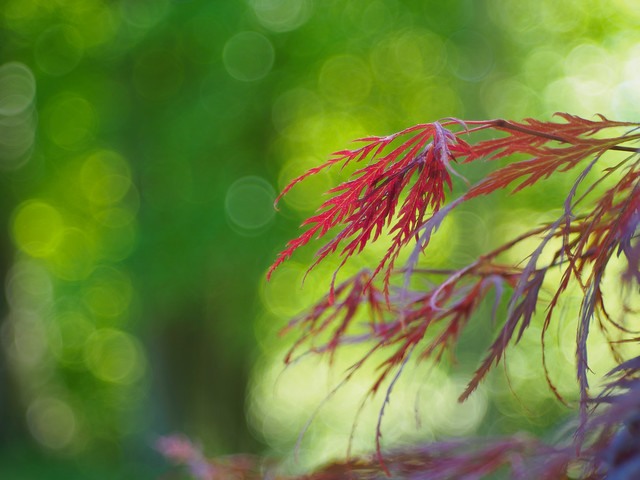 Bokeh is my canvas (4)