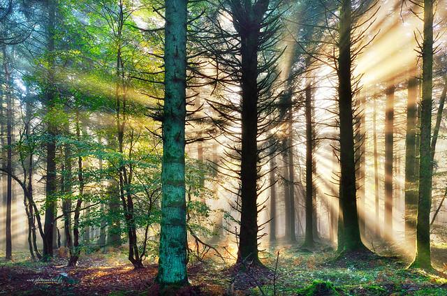 La forêt de Lorges