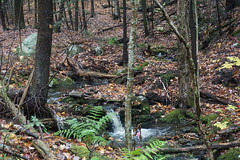 Erving State Forest