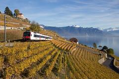 """CFF RBDe 560 Domino """"train des vignes"""" dans le Lavaux"""