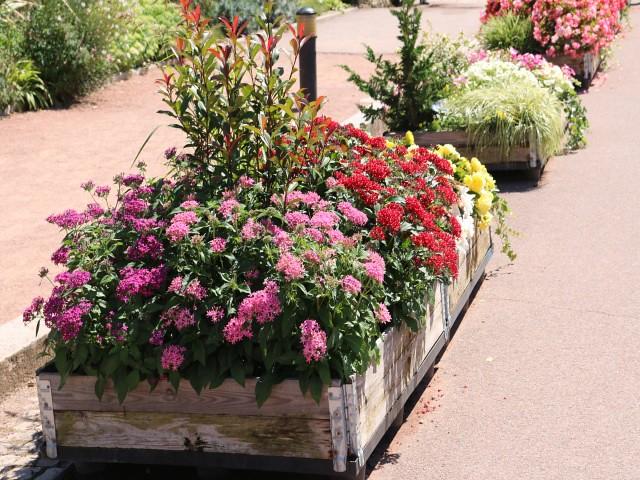 jardin des plantes obiective turistice lyon 6