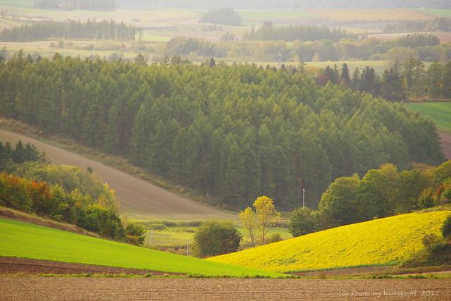 秋のひまわり畑①