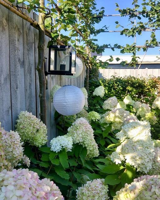 Witte hortensia's lampionnen