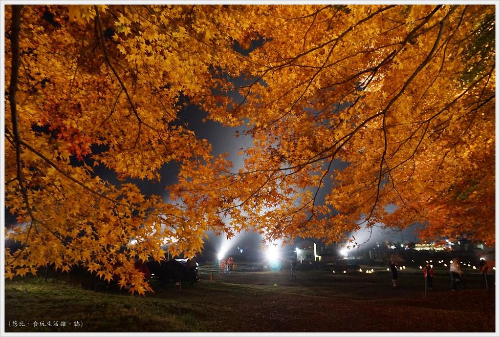 紅葉迴廊-紅葉祭-夜楓-22
