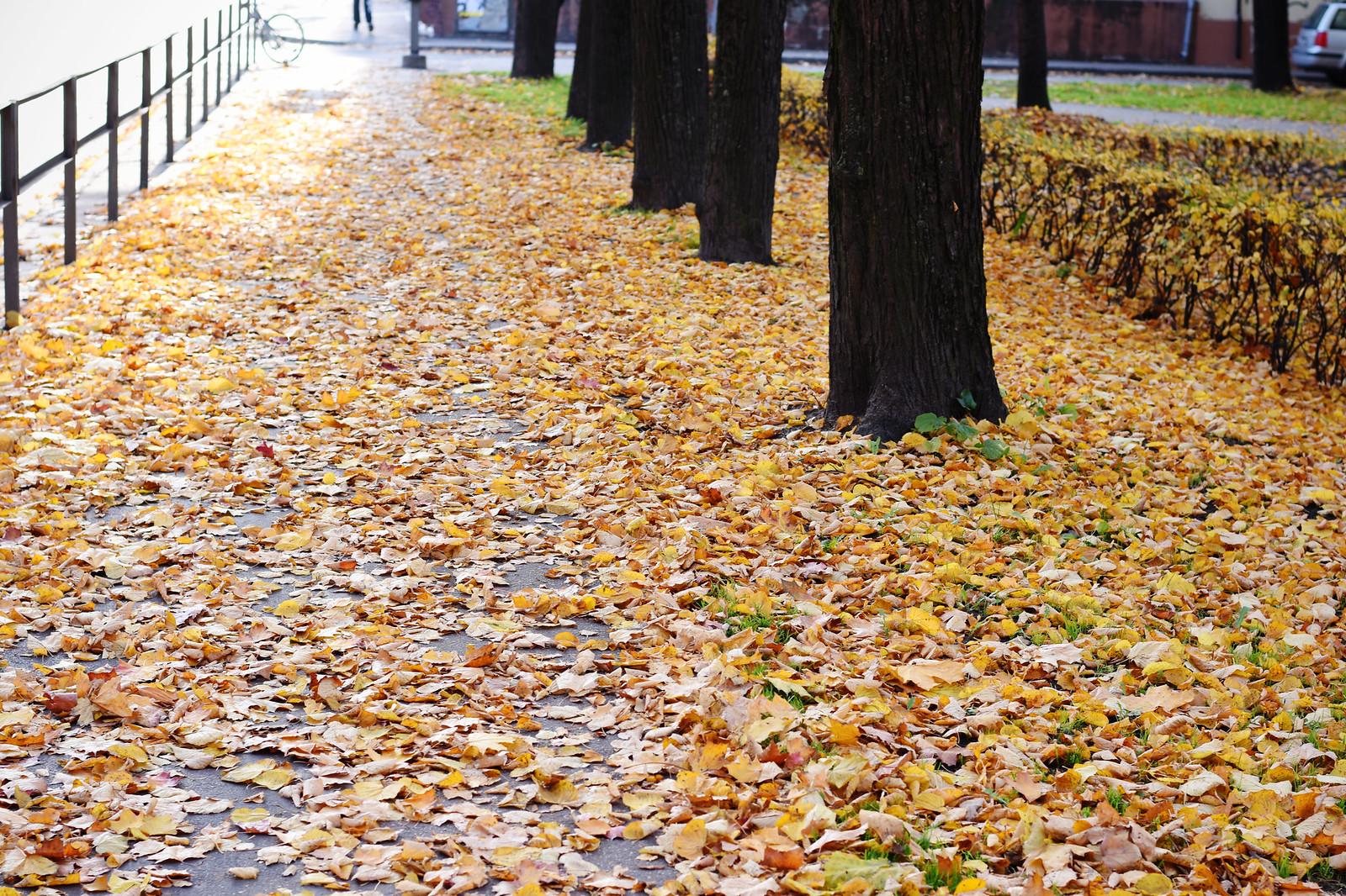 Riga in fall