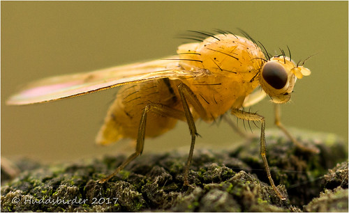 Fly-05016