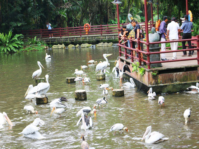 jurong bird park Gradini si Parcuri din Singapore 3