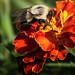 Bee Sweet by skip2molou