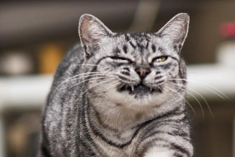 連写の途中でピントがズレてしまったネコの写真2枚め