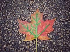 Leaf a-turning