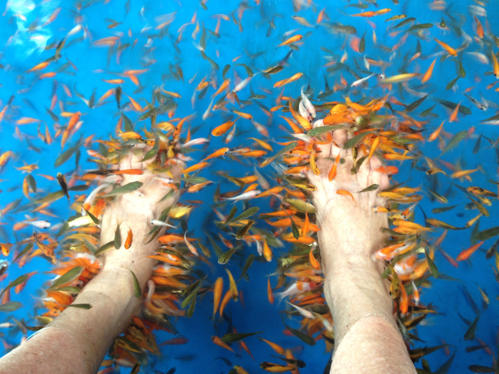 Fish Pedicure