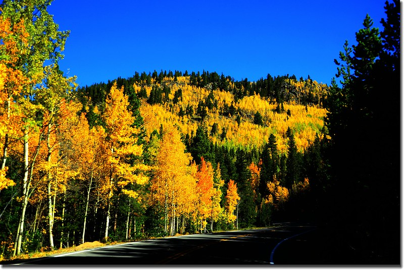 Fall colors, Mount Evans Scenic Byway, Colorado (26)