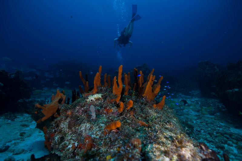 diving (51 de 77)