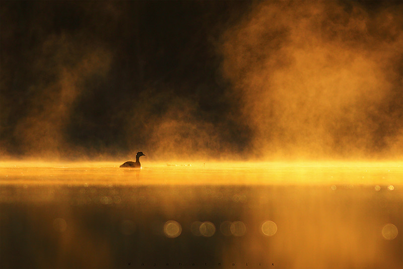 The Golden Lake!!