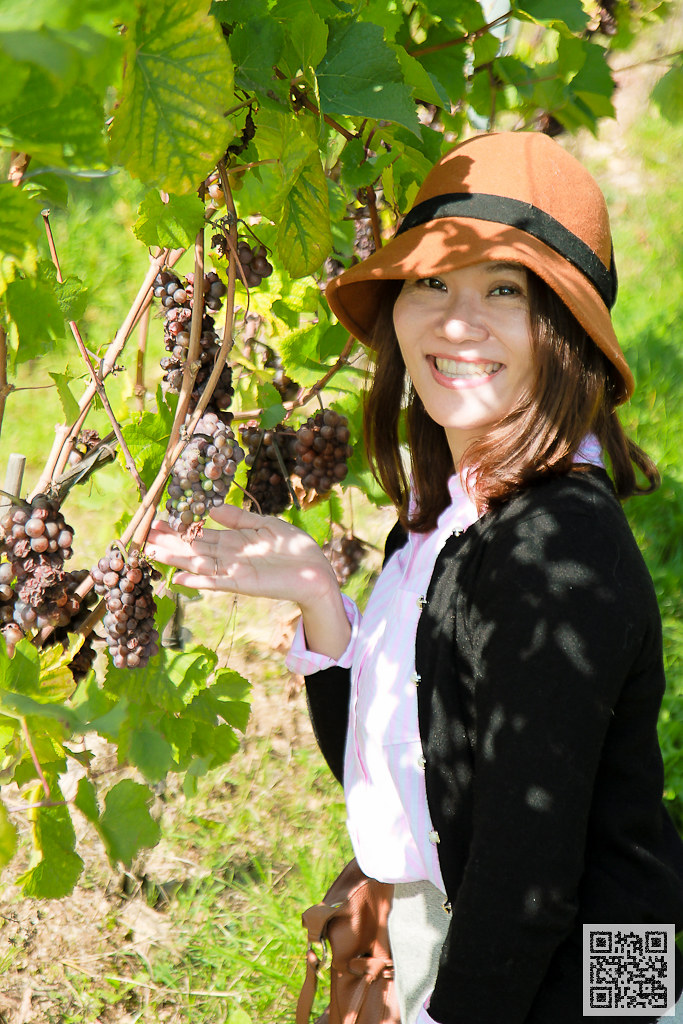萊茵河 黑皮諾紅葡萄此區約佔20%