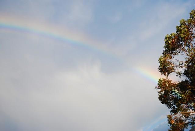 . Rainbow Delight .
