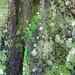 Palenque por bruno vanbesien