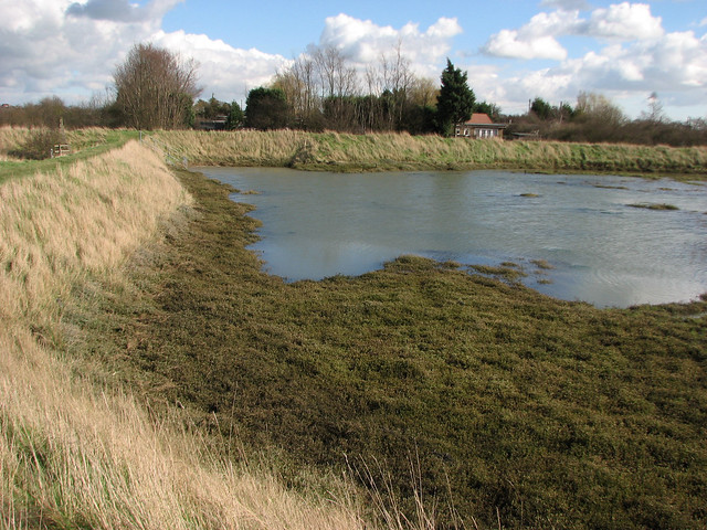 Creek west of Althorne