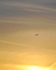sunsetbird.jpg