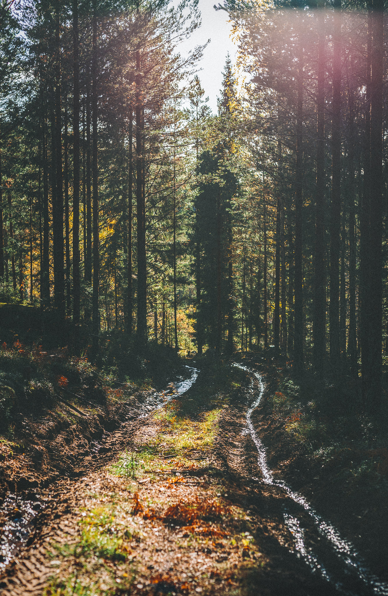 skogspromenad - karinevelina.se