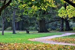 Bushy Park, Woodland Gardens