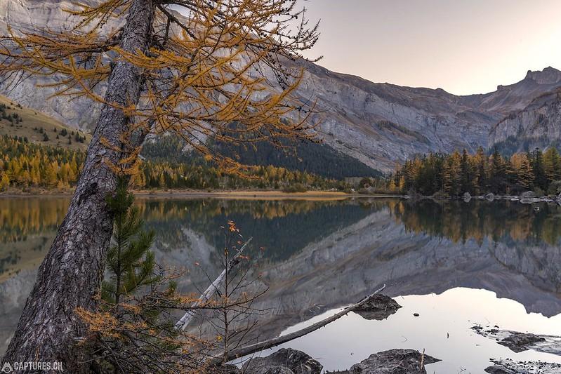 The tree - Lac de Derborence