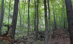 Sleeping Giant White Trail