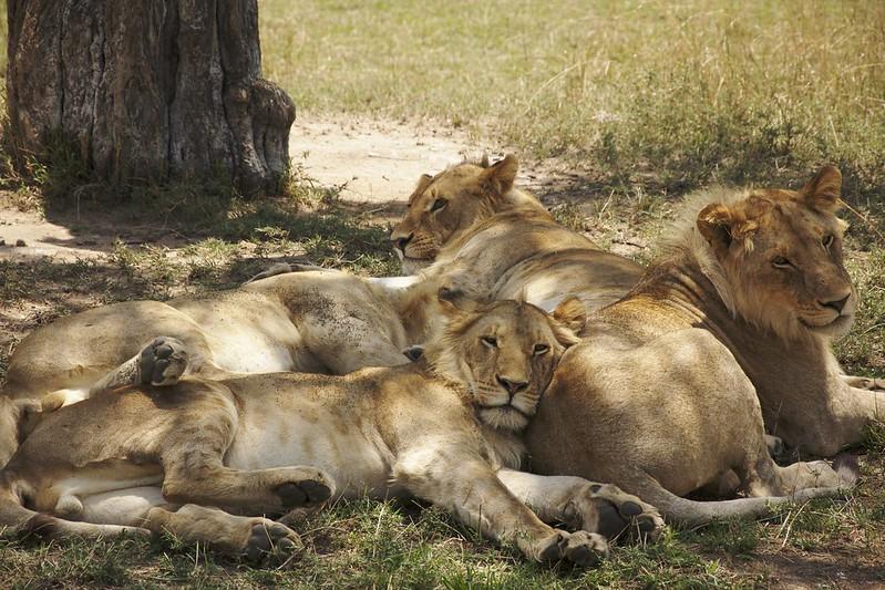 Maasai Mara 2 32