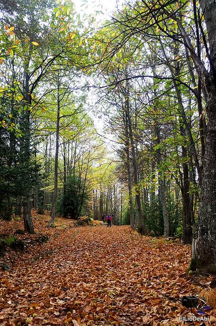Ruta de los Castaños Centenarios en la Metrópoli Verde 17