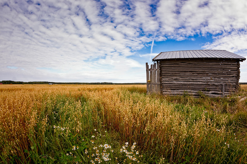 Tiny Barn House On The Oat Fields