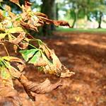 Autumn in Ashton Park, Preston - 1