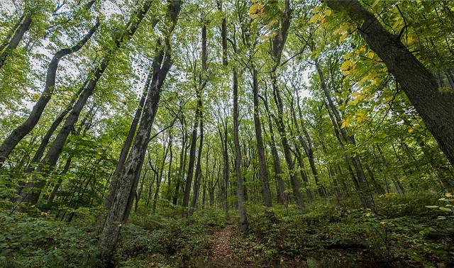 trees pano