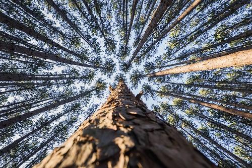 Okemos, Michigan Woods. Photographer Dan Price