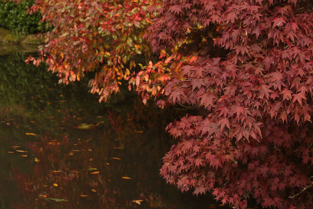 Leaves and the Lake - Sheffield Park in Autumn