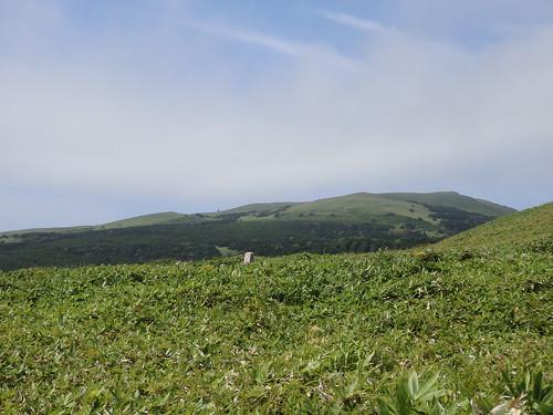 気候的に島のほとんどが高山の植生 ちょっと登っただけでこの景色