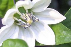 garden flowers IMG_7100
