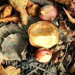 Autumn in Ashton Park, Preston - 3