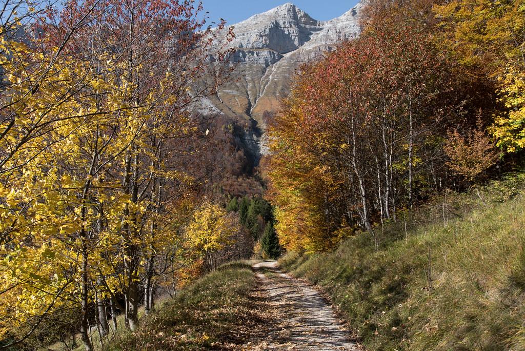 L'automne sur le rebord oriental du Vercors, col de l'Arzelier (Isère, France)