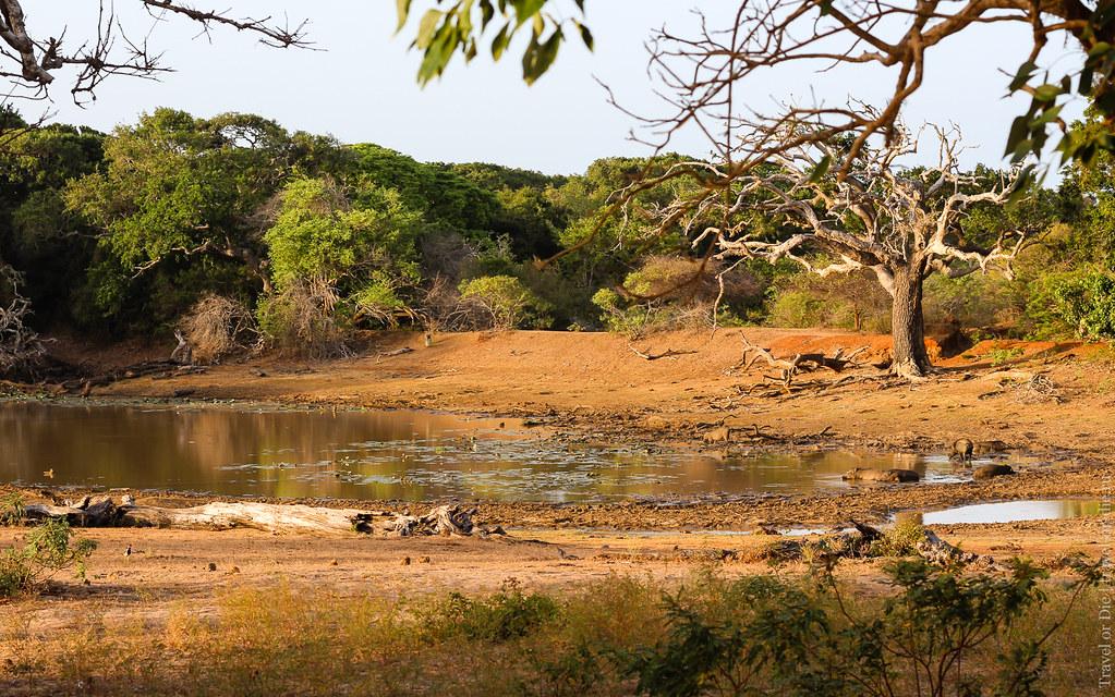 25.06-Yala-National-Park-Sri-Lanka-canon-1500px-013