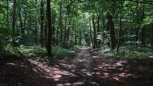 Wald, Busch und Wildnis auf Himmel und Erde sind gleich, Himmel werde grün und Erde blühe, da spricht die Erde: Sterbe! 02098