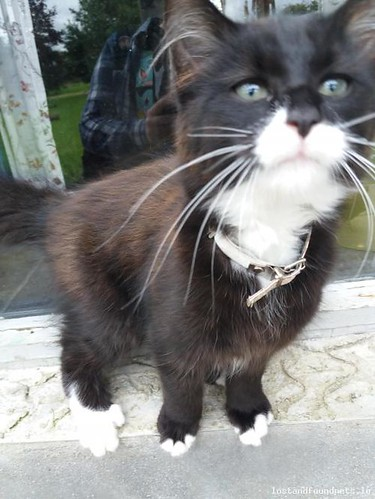 Mon, Oct 16th, 2017 Lost Male Cat - Unnamed Road, Tipperary South
