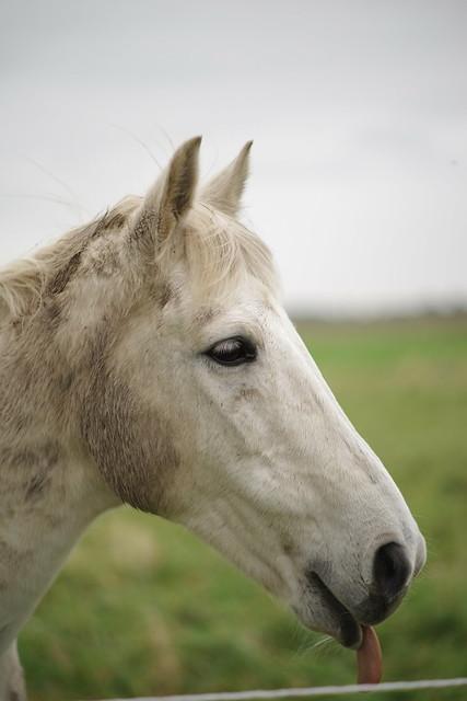 rain horse