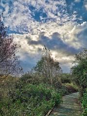 Rainham Marshes (RSPB Outing)